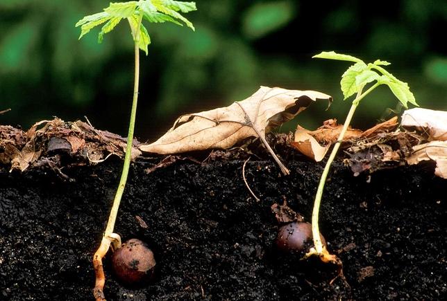 Sprouting Underground